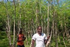 moringa-oleifera-tree32