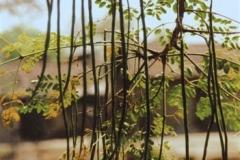 pods & leaves